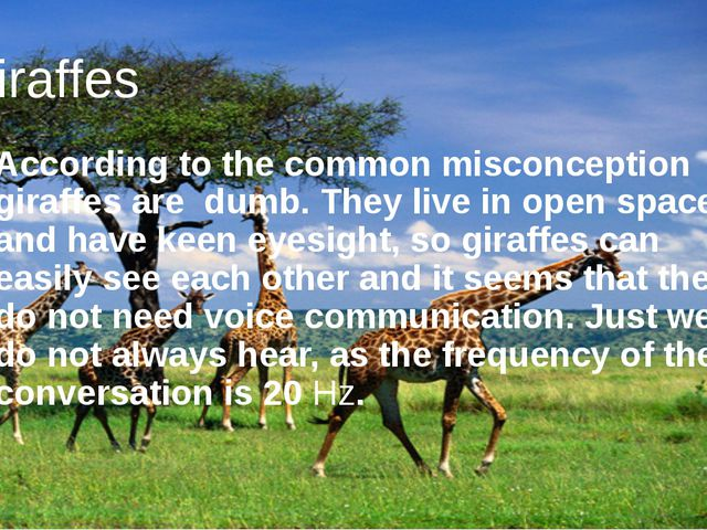 Giraffes According to the common misconception giraffes are dumb. They live i...