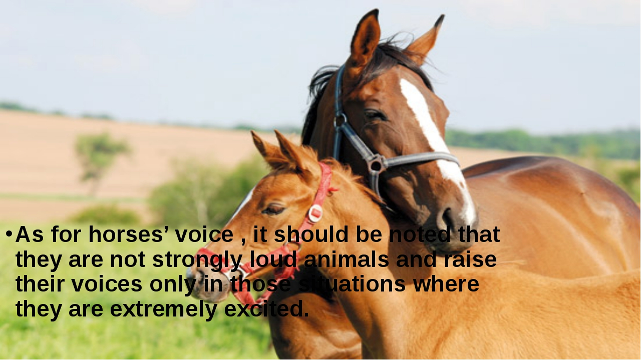 As for horses' voice , it should be noted that they are not strongly loud an...