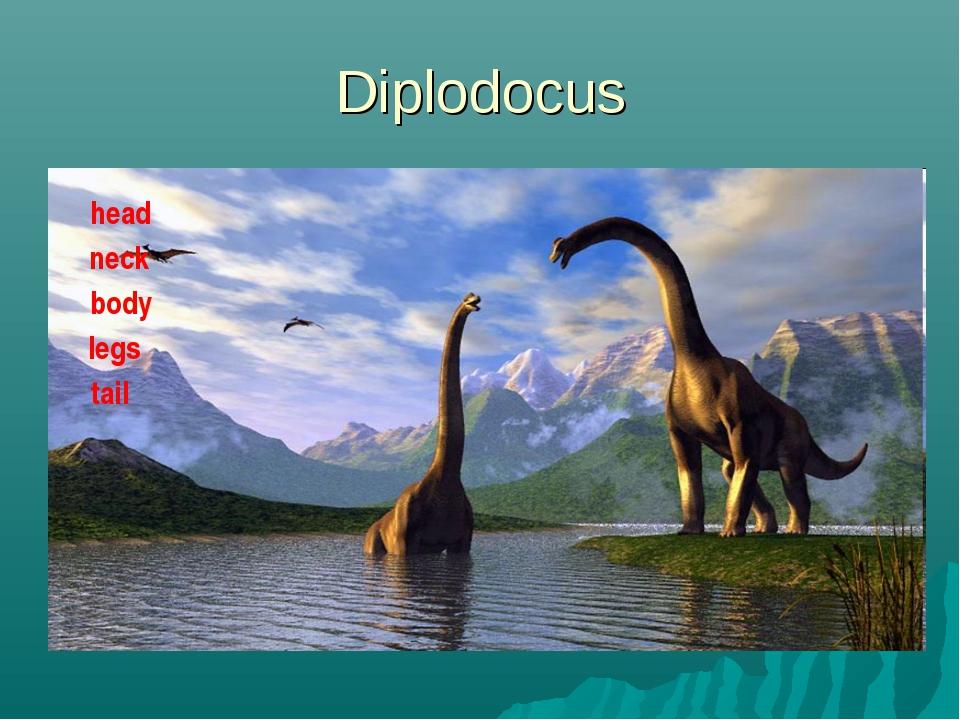 Diplodocus head neck body legs tail