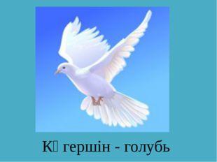 Көгершін - голубь