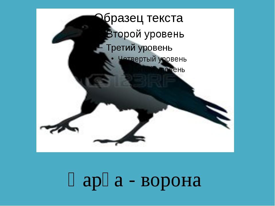 Қарға - ворона