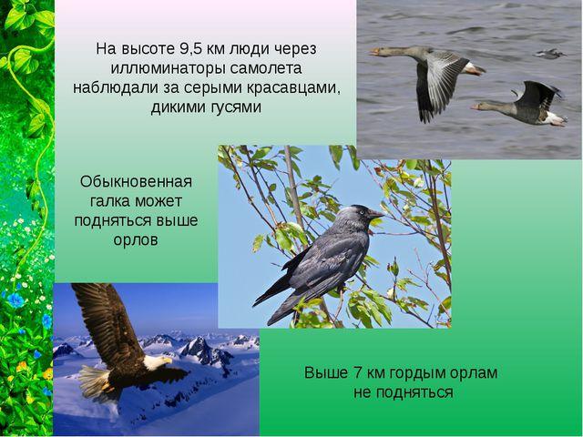 Выше 7 км гордым орлам не подняться Обыкновенная галка может подняться выше о...
