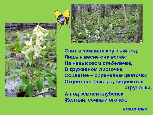 Спит в землице круглый год, Лишь к весне она встаёт: На невысоком стебелёчке,...