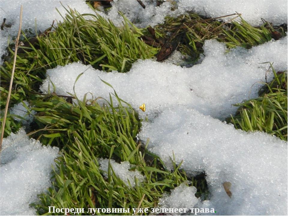 Посреди луговины уже зеленеет трава.