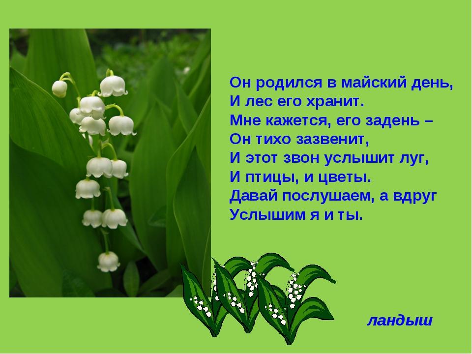 Он родился в майский день, И лес его хранит. Мне кажется, его задень – Он тих...