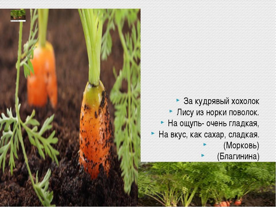 Почему сравнивается с лисой Прямое значение Морковная ботва Морковь Из земли...