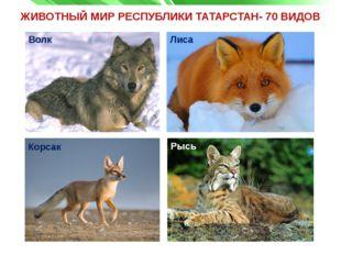 ЖИВОТНЫЙ МИР РЕСПУБЛИКИ ТАТАРСТАН- 70 ВИДОВ Волк Корсак Рысь Лиса