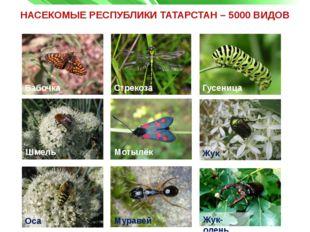 НАСЕКОМЫЕ РЕСПУБЛИКИ ТАТАРСТАН – 5000 ВИДОВ Бабочка Бабочка Стрекоза Гусеница