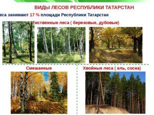 ВИДЫ ЛЕСОВ РЕСПУБЛИКИ ТАТАРСТАН Лиственные леса ( березовые, дубовые) Леса за