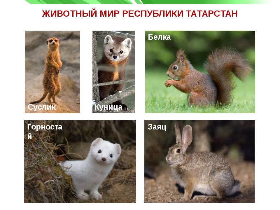что перед животные татарстана фото с названиями цветущая