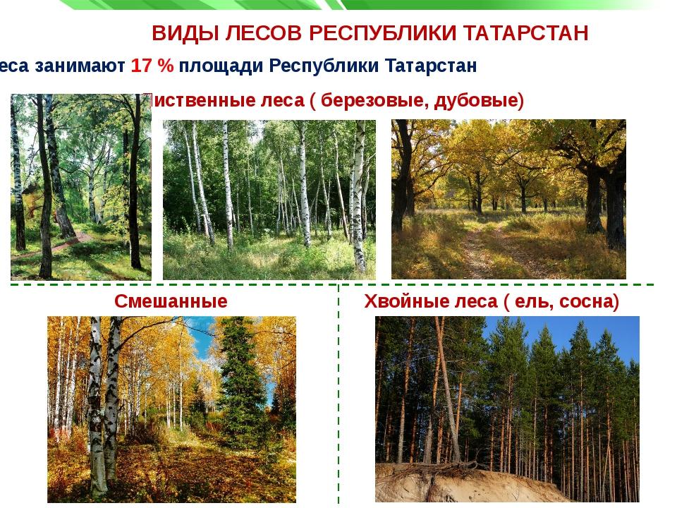 ВИДЫ ЛЕСОВ РЕСПУБЛИКИ ТАТАРСТАН Лиственные леса ( березовые, дубовые) Леса за...