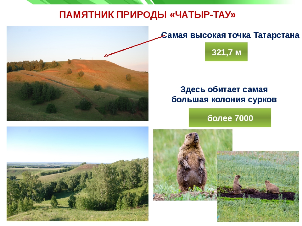 ПАМЯТНИК ПРИРОДЫ «ЧАТЫР-ТАУ» Самая высокая точка Татарстана Здесь обитает сам...
