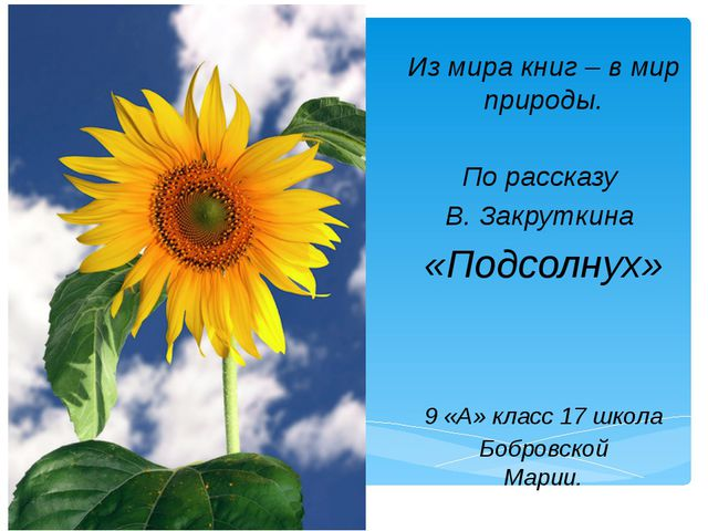 Из мира книг – в мир природы. По рассказу В. Закруткина «Подсолнух» 9 «А» кл...