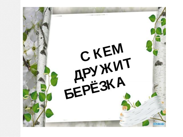 С КЕМ ДРУЖИТ БЕРЁЗКА