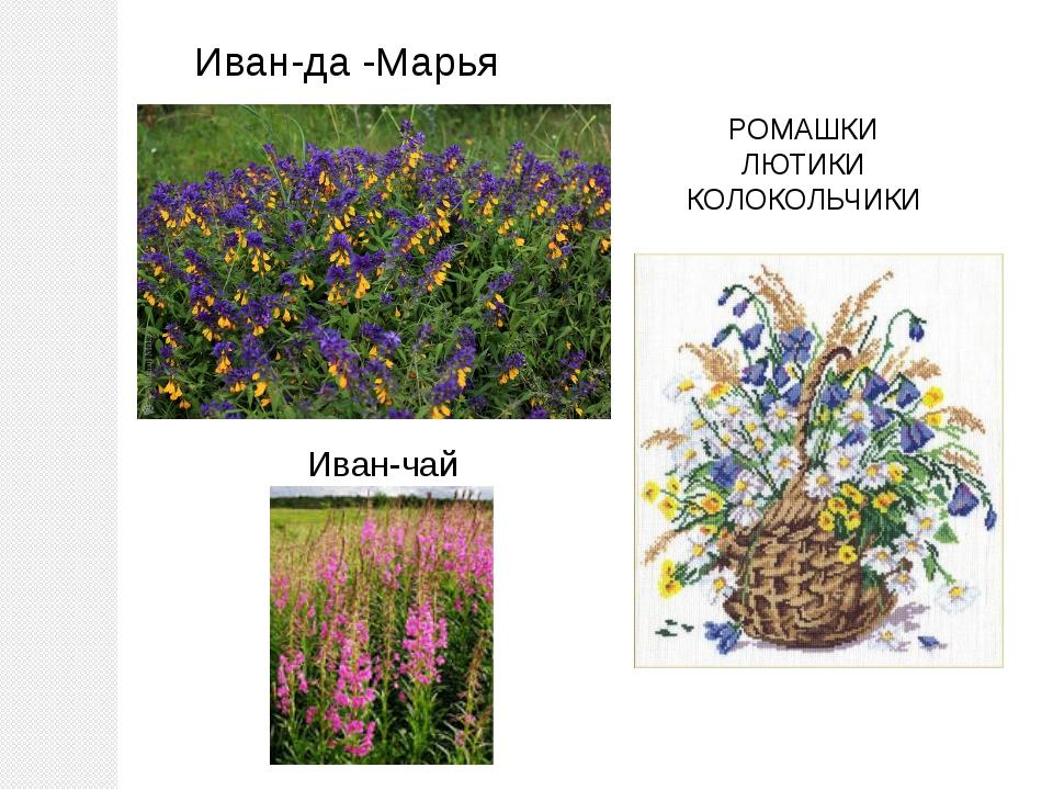 Иван-да -Марья РОМАШКИ ЛЮТИКИ КОЛОКОЛЬЧИКИ Иван-чай