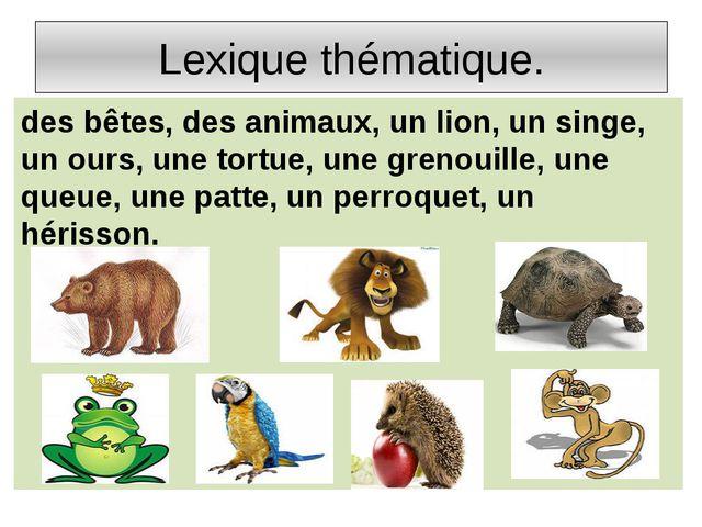 Lexique thématique. des bêtes, des animaux, un lion, un singe, un ours, une t...