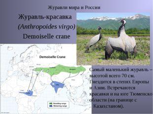 Журавли мира и России Журавль-красавка (Anthropoides virgo) Demoiselle crane