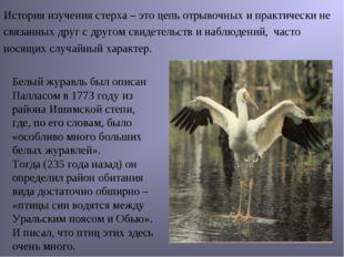 Белый журавль был описан Палласом в 1773 году из района Ишимской степи, где,