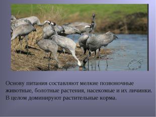 Основу питания составляют мелкие позвоночные животные, болотные растения, на