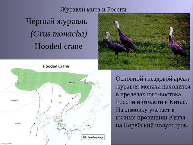 Журавли мира и России Чёрный журавль (Grus monacha) Hooded crane Основной гне...
