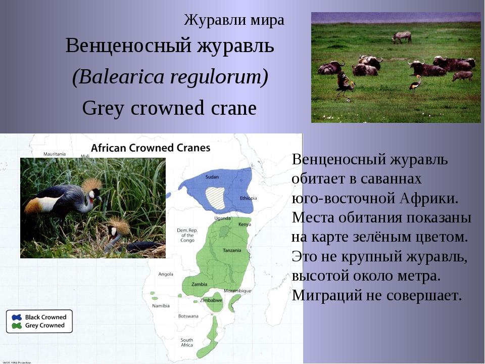 Журавли мира Венценосный журавль (Balearica regulorum) Grey crowned crane Вен...