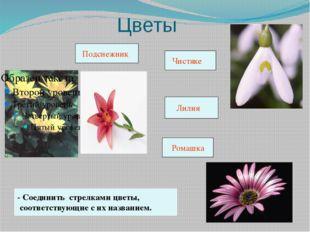 Цветы - Соединить стрелками цветы, соответствующие с их названием. Подснежни