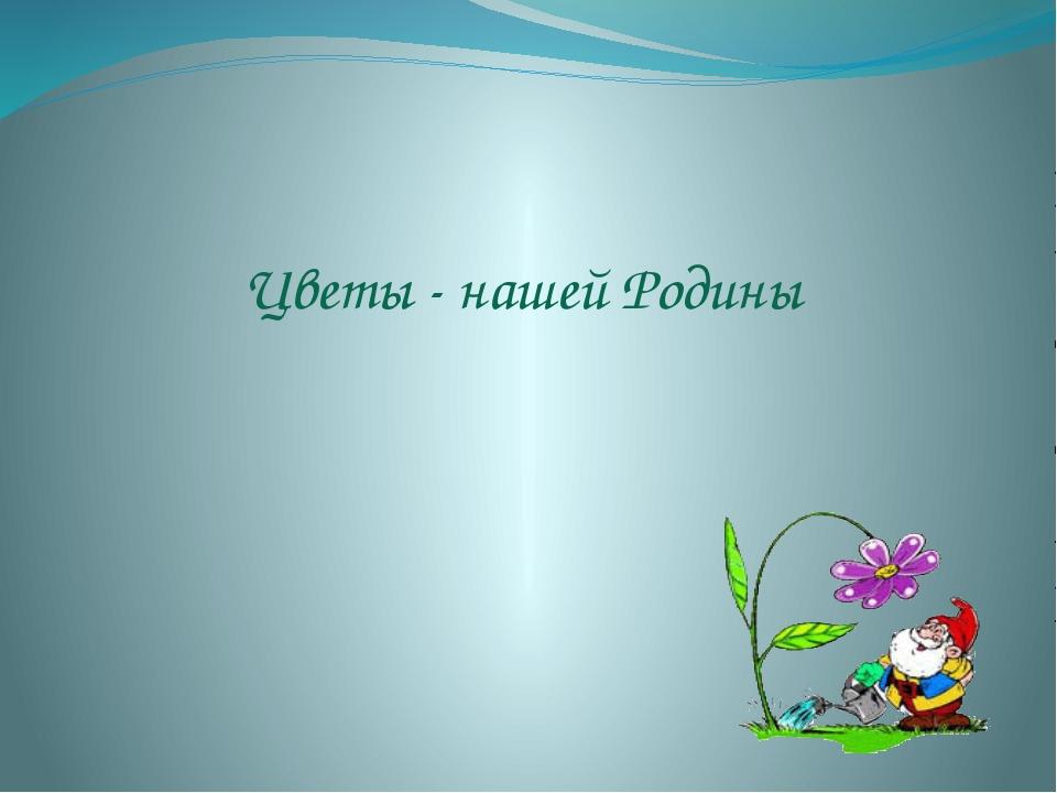 Цветы - нашей Родины
