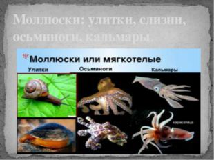 Моллюски: улитки, слизни, осьминоги, кальмары.