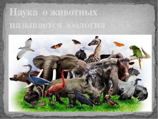 Наука о животных называется зоология