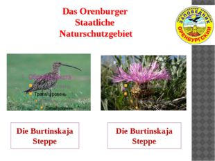 Das Orenburger Staatliche Naturschutzgebiet Die Burtinskaja Steppe Die Burtin