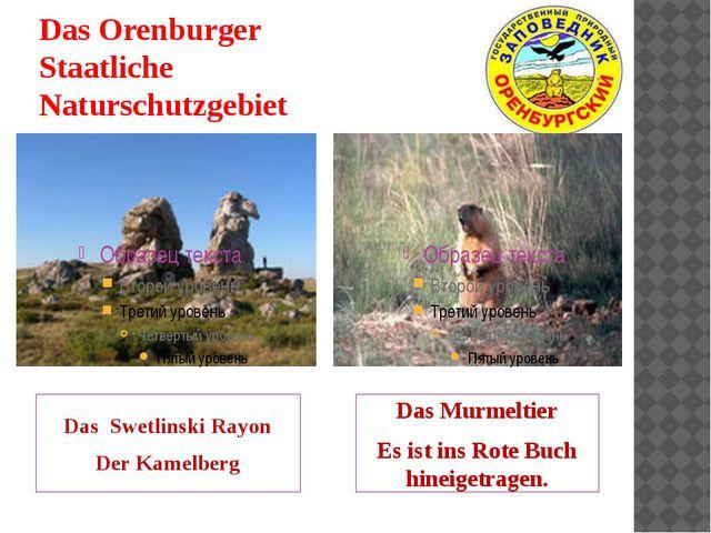 Das Orenburger Staatliche Naturschutzgebiet Das Swetlinski Rayon Der Kamelber...