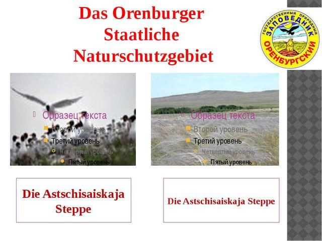 Das Orenburger Staatliche Naturschutzgebiet Die Astschisaiskaja Steppe Die As...