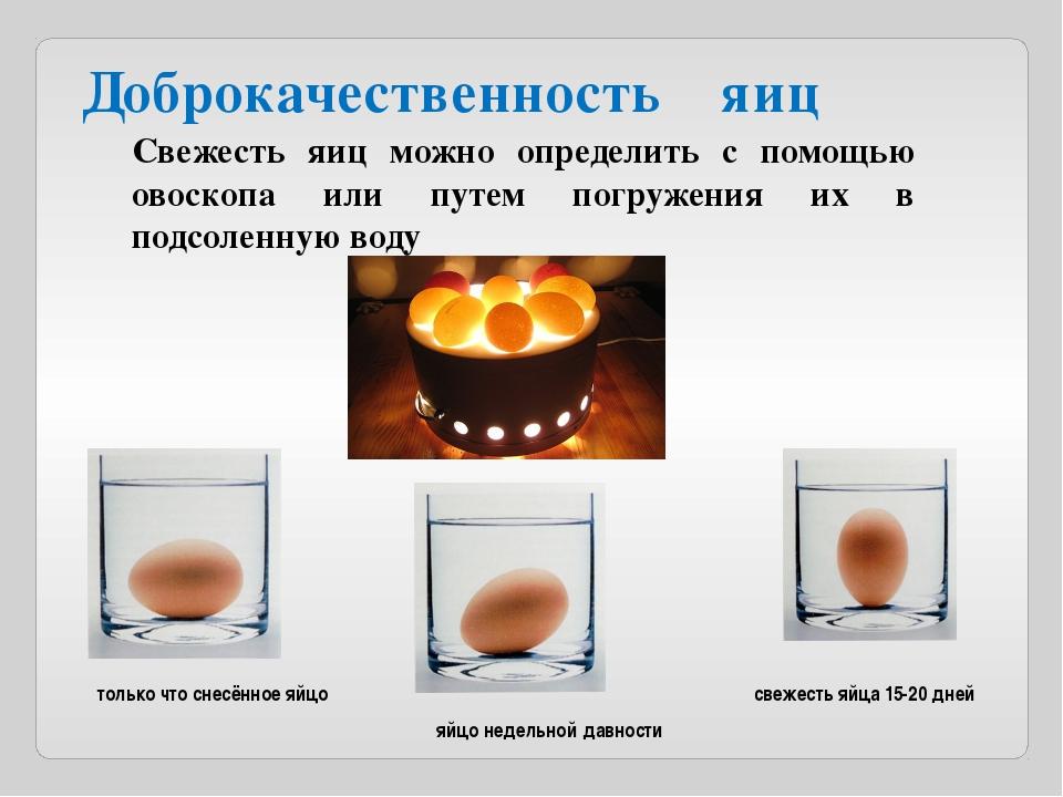 Доброкачественность яиц Свежесть яиц можно определить с помощью овоскопа или...