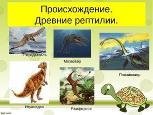 Происхождение. Древние рептилии. Птеродактиль Игуанодон Мозазавр Плезиозавр Р