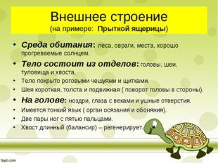 Внешнее строение (на примере: Прыткой ящерицы) Среда обитания: леса, овраги,