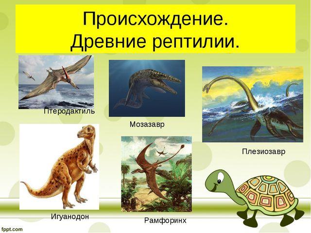 Происхождение. Древние рептилии. Птеродактиль Игуанодон Мозазавр Плезиозавр Р...