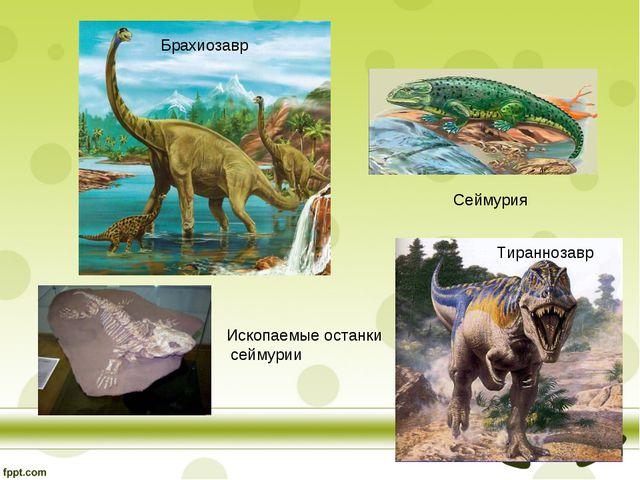 Сеймурия Тираннозавр Брахиозавр Ископаемые останки сеймурии