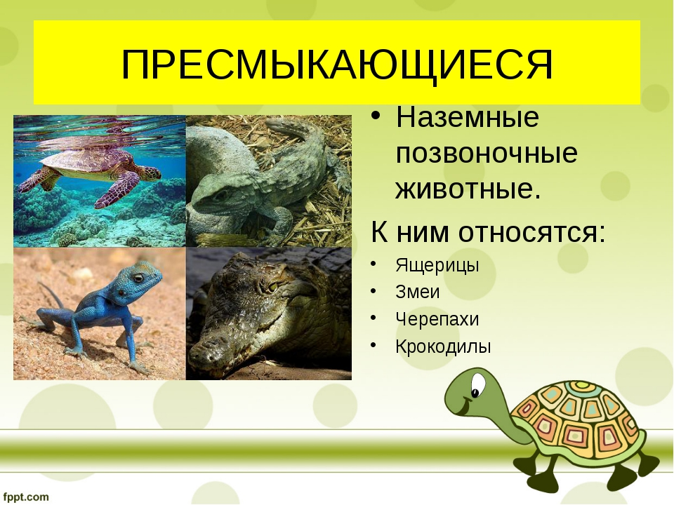 ПРЕСМЫКАЮЩИЕСЯ Наземные позвоночные животные. К ним относятся: Ящерицы Змеи Ч...