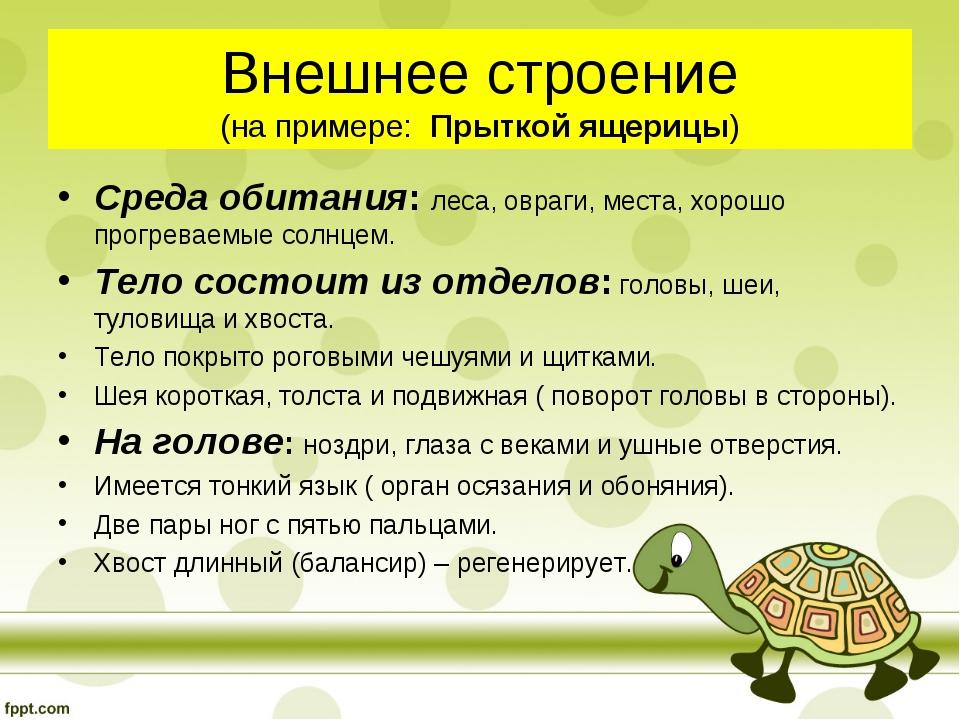Внешнее строение (на примере: Прыткой ящерицы) Среда обитания: леса, овраги,...