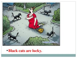 Black cats are lucky.