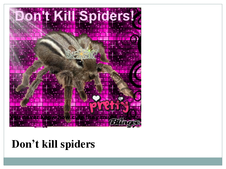 Don't kill spiders