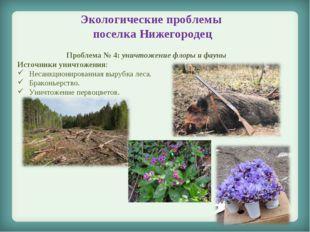 Экологические проблемы поселка Нижегородец Проблема № 4: уничтожение флоры и