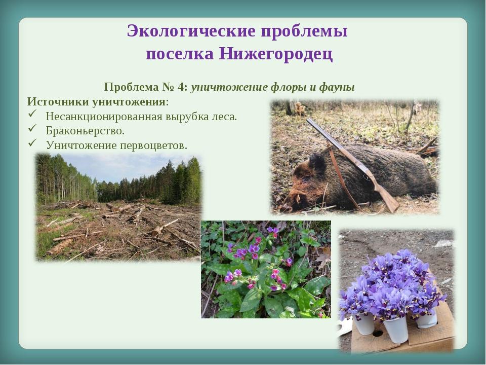Экологические проблемы поселка Нижегородец Проблема № 4: уничтожение флоры и...