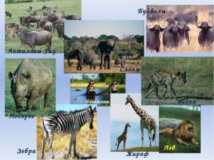 Вопрос 29 Назовите главные экологические проблемы, возникшие в Африке, в резу