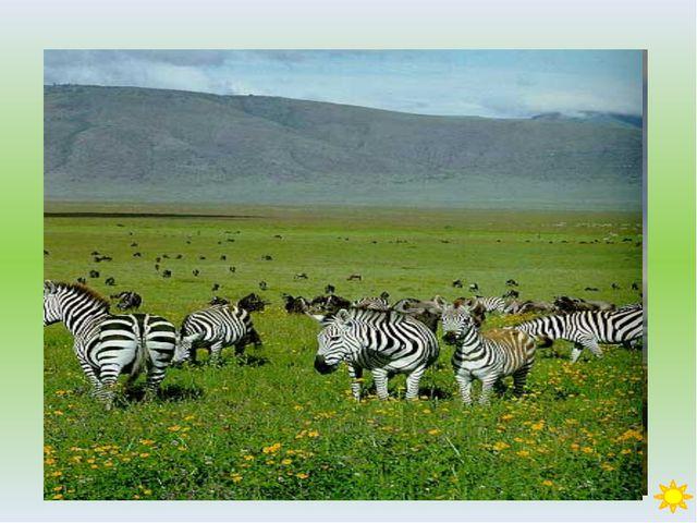 Вопрос 39 Это человекообразное животное обитает в горных лесах центральной А...