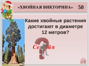 Зиме «ЗИМНЯЯ ВИКТОРИНА» 10 Чему равна «сумма» декабря, января и февраля?