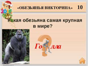 20 Какая из обезьян считается самым ближайшим родственником человека? «ОБЕЗЬЯ