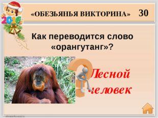 Ревун 40 Как называется самый шумный примат?  «ОБЕЗЬЯНЬЯ ВИКТОРИНА»