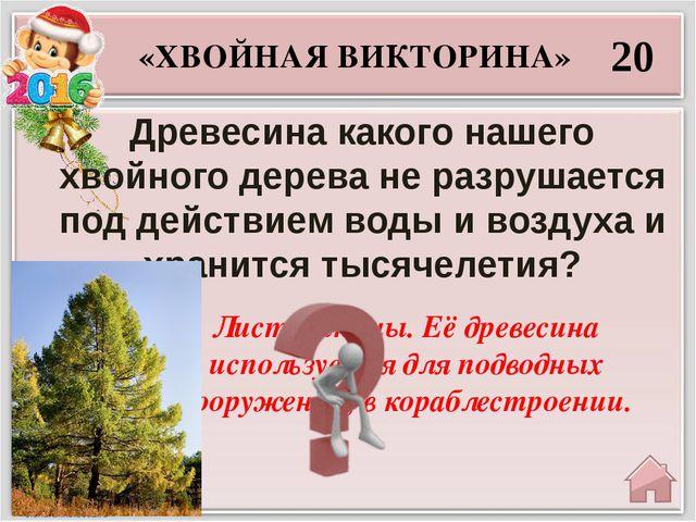 30 Можжевельник «ХВОЙНАЯ ВИКТОРИНА» Какое растение называют «виноградом хвойн...