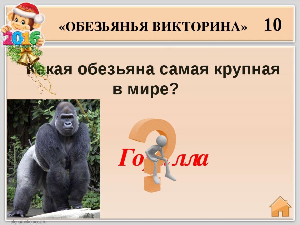 20 Какая из обезьян считается самым ближайшим родственником человека? «ОБЕЗЬЯ...